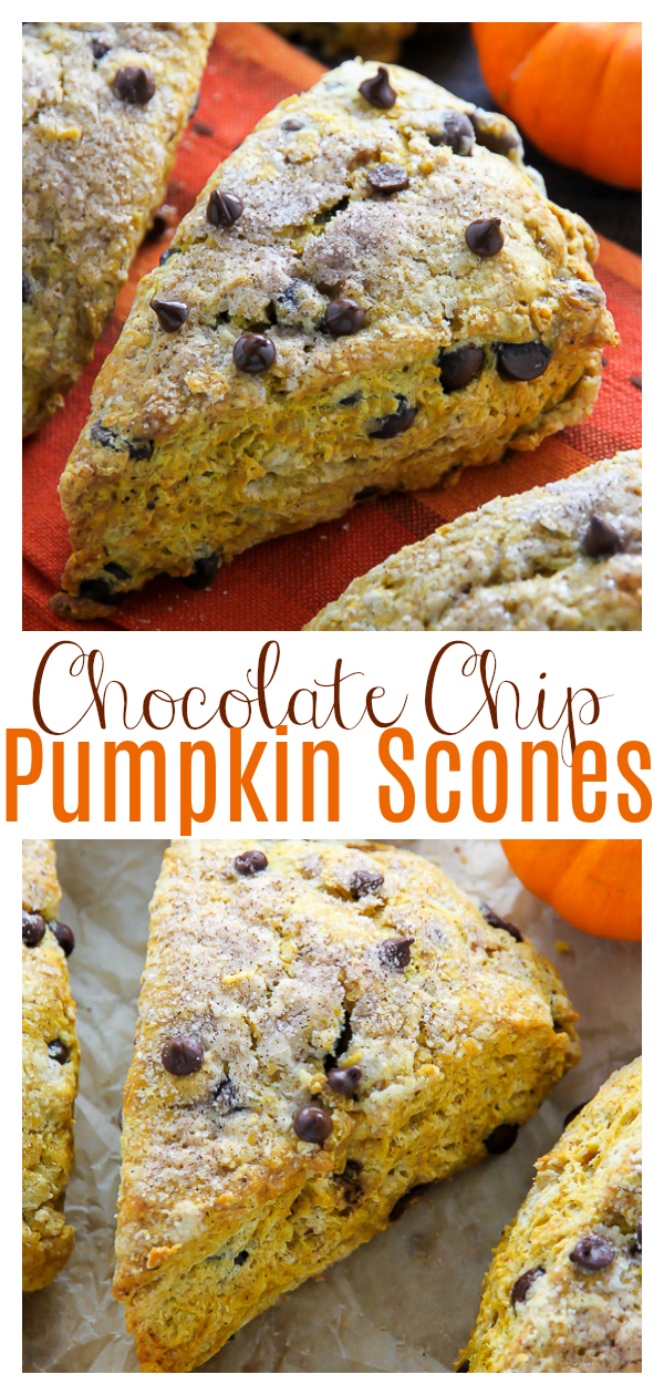 Classic and crumbly Pumpkin Chocolate Chip Scones! This easy scone recipe is loaded with pumpkin flavor and mini chocolate chips. Perfect for Fall baking!